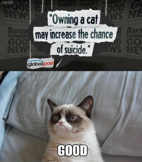11 grumpy cat