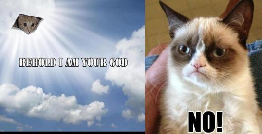 12 Grumpy cat god