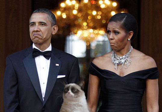 15 Grumpy cat obama