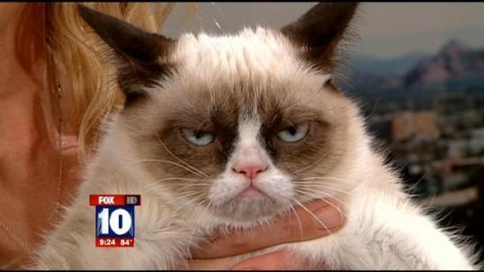 2 Grumpy cat TV