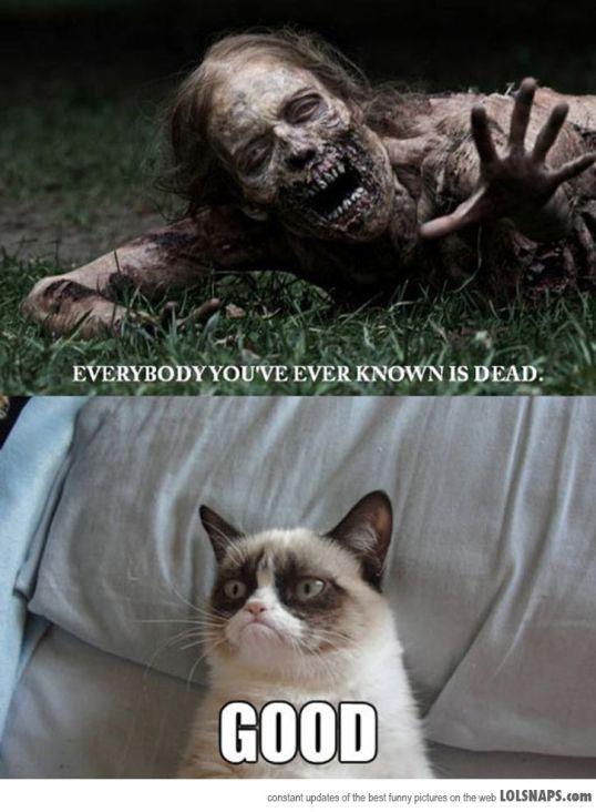 3 Grumpy cat