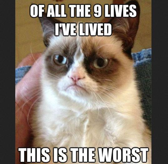 4 Grumpy cat